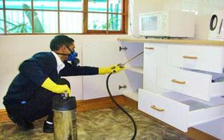 Anti termite Abu dhabi - Bright Rise Pest Control