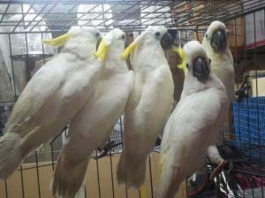 African grey,macaw, and fresh tested parrot eggs for sale . WhatsApp: +1 (951) 999 6702