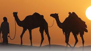 Best Desert safari deals in dubai @25 AED