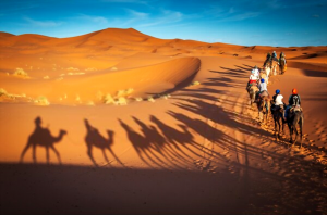 Desert Evening Safari